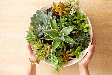 Succulent Shallow Bowl Planter DIY