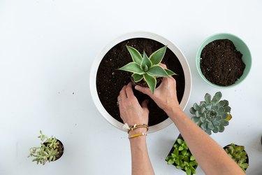 How to build a succulent bowl planter