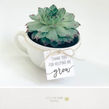 small succulent gift