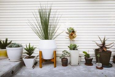 Backyard succulents.