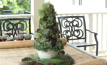 Petite succulent DIY Christmas tree idea on table