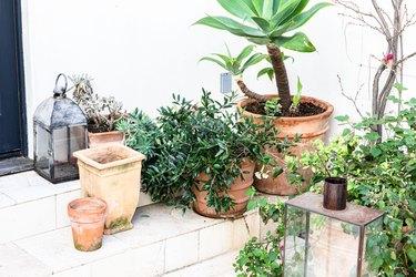 Terra cotta garden pots with plants
