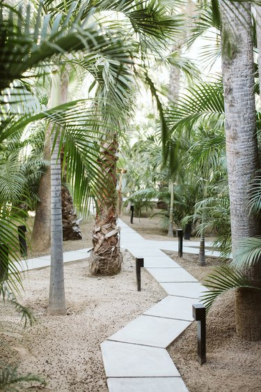 A concrete path way in the midst of several palm trees with landscape lighting along the path