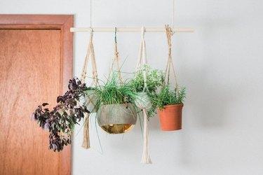 Plant hanger using a dowel