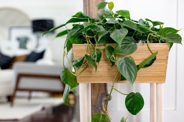 Bamboo box and dowels as a planter