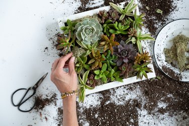 how to make a succulent wall planter