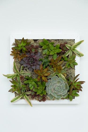 Succulent Wall Planter