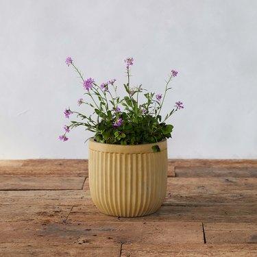 concrete pot with plant inside