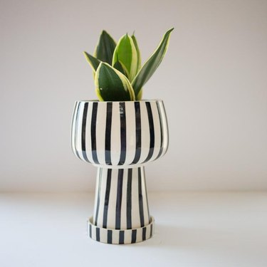 striped planter with plant