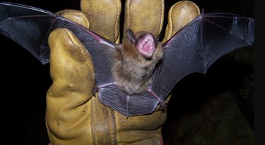 Catching a loose bat.