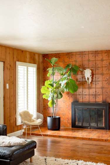 Fireplace with tall plant in front