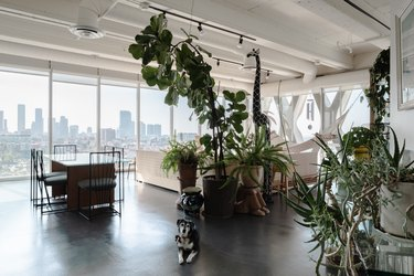 Plants in loft with view of Los Angeles skyline
