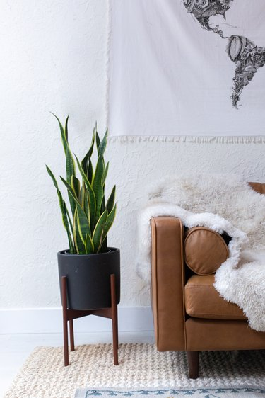 Leather couch withe sheepskin rug next to black planter with a snake plant