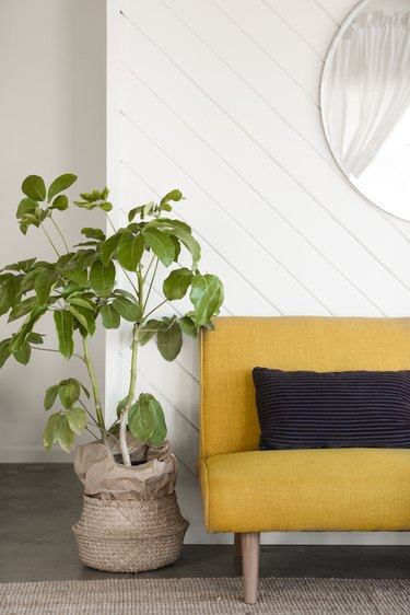 Plant next to yellow couch