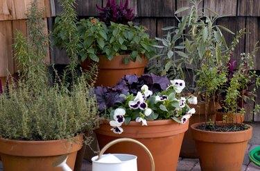 fall plants outside