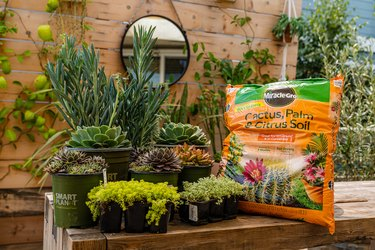 cacti and potting soil