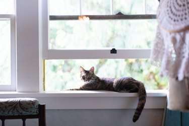 Cat lounging in open window
