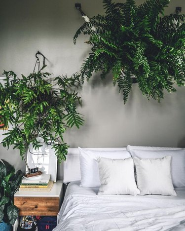 bedroom with lush greenery and gray walls