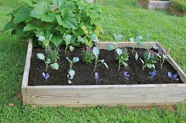 fall vegetables in raised garden bed