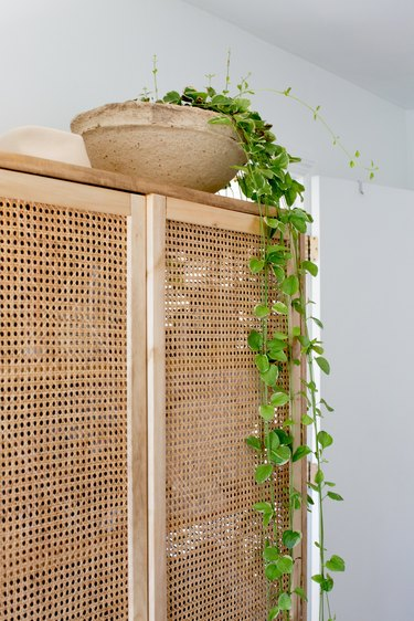 Plant on cane cabinet