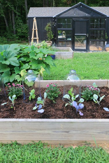 fall vegetables in glass cloches