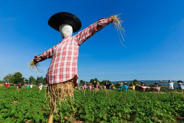 Scarecrow in field.