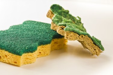 Old and new sponges