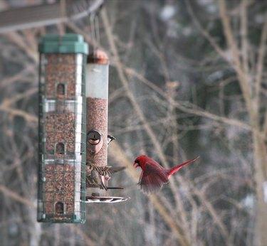 Birds at a feeder.