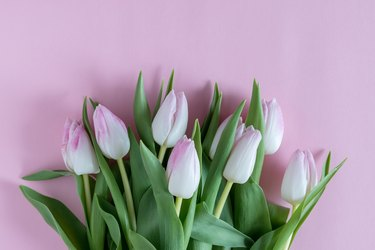Creative layout of tulips on pink background. Flat lay.