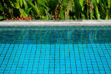 Swimming pool clear water showing turquoise blue clay square tiles and cement grout lines with sandwash edge and Bird of Paradise flower in red and yellow blooming with green leaves background