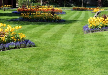 Image of park with colourful spring flowers and tulip bulbs