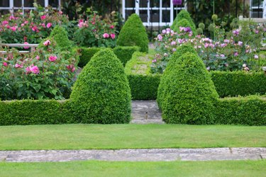 Image of formal knot garden with parterre box hedging surrounding blooming rose beds with pink flowers and paving slab footpaths