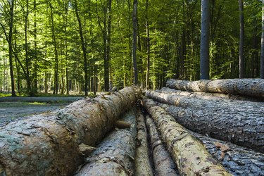 Cut trees in the forest.