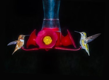 Two hummingbirds feeding in the night on the feeder