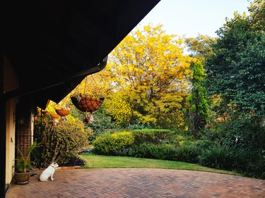 Small dog looks out over beautiful sunny garden