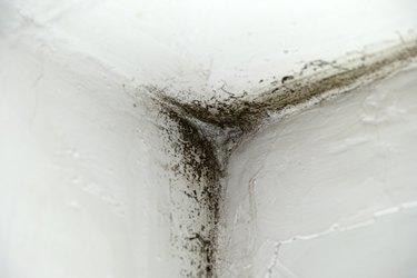 Mold in corner