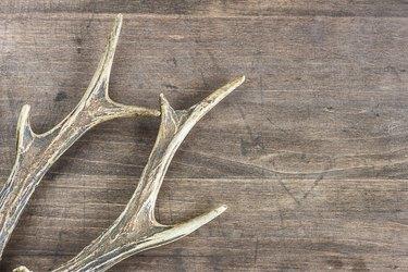 How to Build Your Own Deer Antler Chandelier