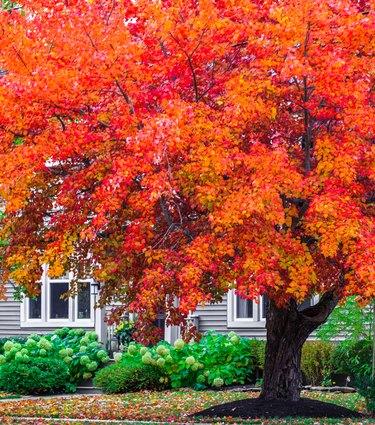 Autumn colors in urban area