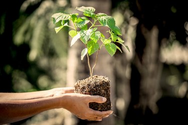 Man hand holding young tree for prepare into soil