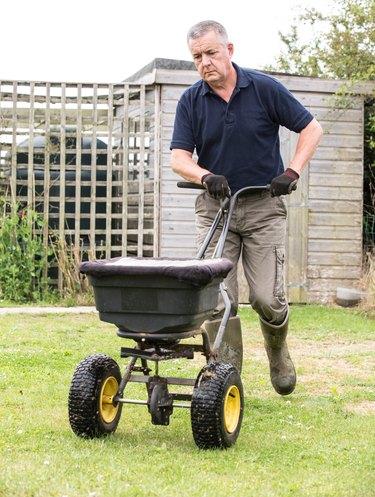 Gardener horticulturalist spreading lawn fertiliser  to cultivate lawn