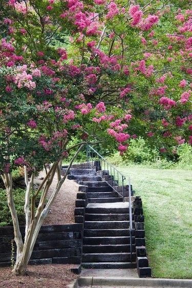 Condominium Steps