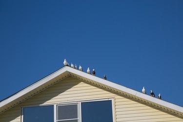 Doves birdssitting white roof blue sky background