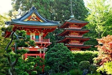SF Japanese Tea Garden Study 21