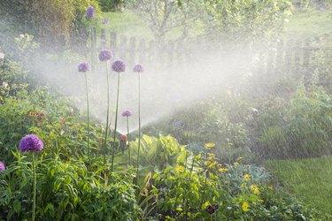 Watering in the flower garden