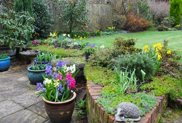 Early spring flowers in domestic garden, England.