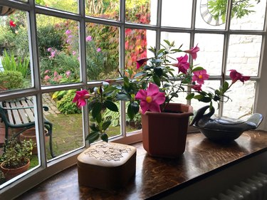A garden view from an old English cottage window