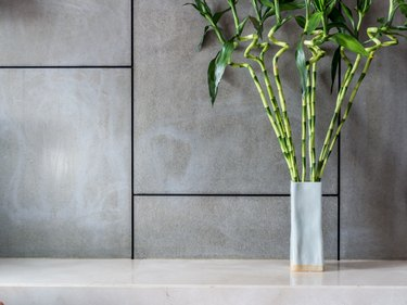 Blank modern room with vase of Lucky bamboo (Belgian evergreen)
