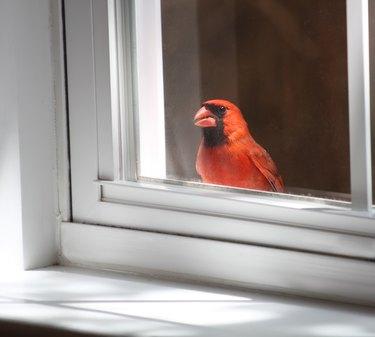 Birdie in the Window