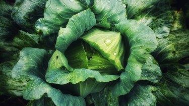 Full Frame Shot Of Wet Cabbage