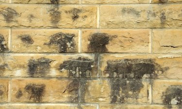 Damp sandstone wall stained with mildew